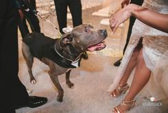 Baltimore Ravens Lineman Changes His Wedding Venue So That His Pit Bull Could Walk Down The Aisle