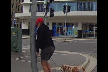 Angry Pedestrian Flips Out And Gets Some Instant Karma